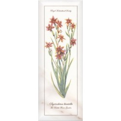 Ноттингем Цветы грань NT A88 15005